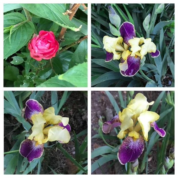 Fleurs de mai 3.jpg