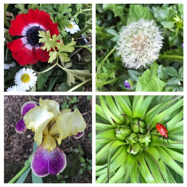 Fleurs de mai 4.jpg