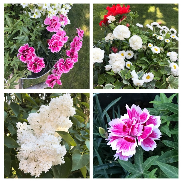 Fleurs de mai .jpg