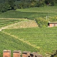 Château et vignes à Ortenberg